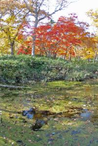 autumn1-thumb-560x836-75