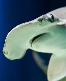 hammerhead-shark07