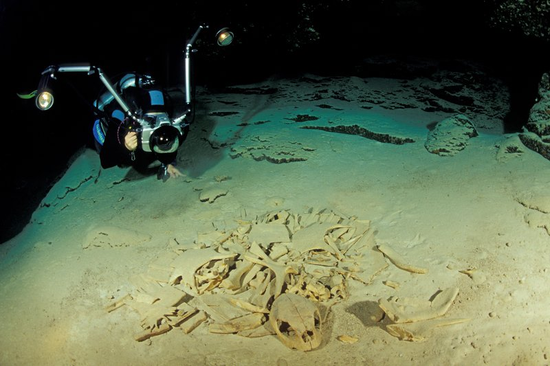 Diver photographs Skeletal Remains of Turtles in Turtle Tomb, Sipadan, Borneo, Malaysia