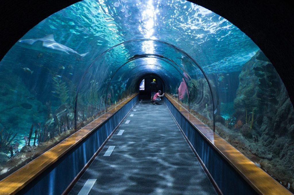shark-tunnel-473012_1280