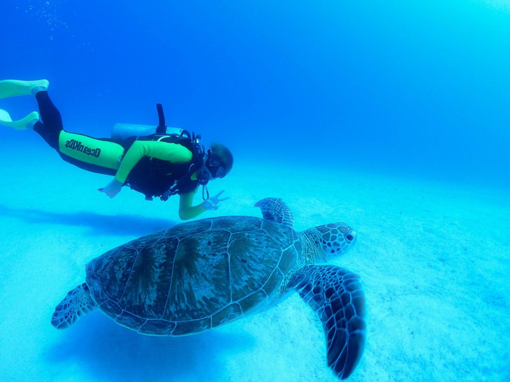 ダイバーとウミガメ