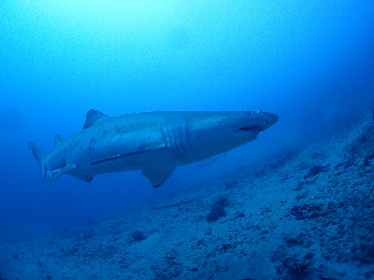 【新入生の疑問】サメが怖い!?いやっむしろ会わせて下さい!