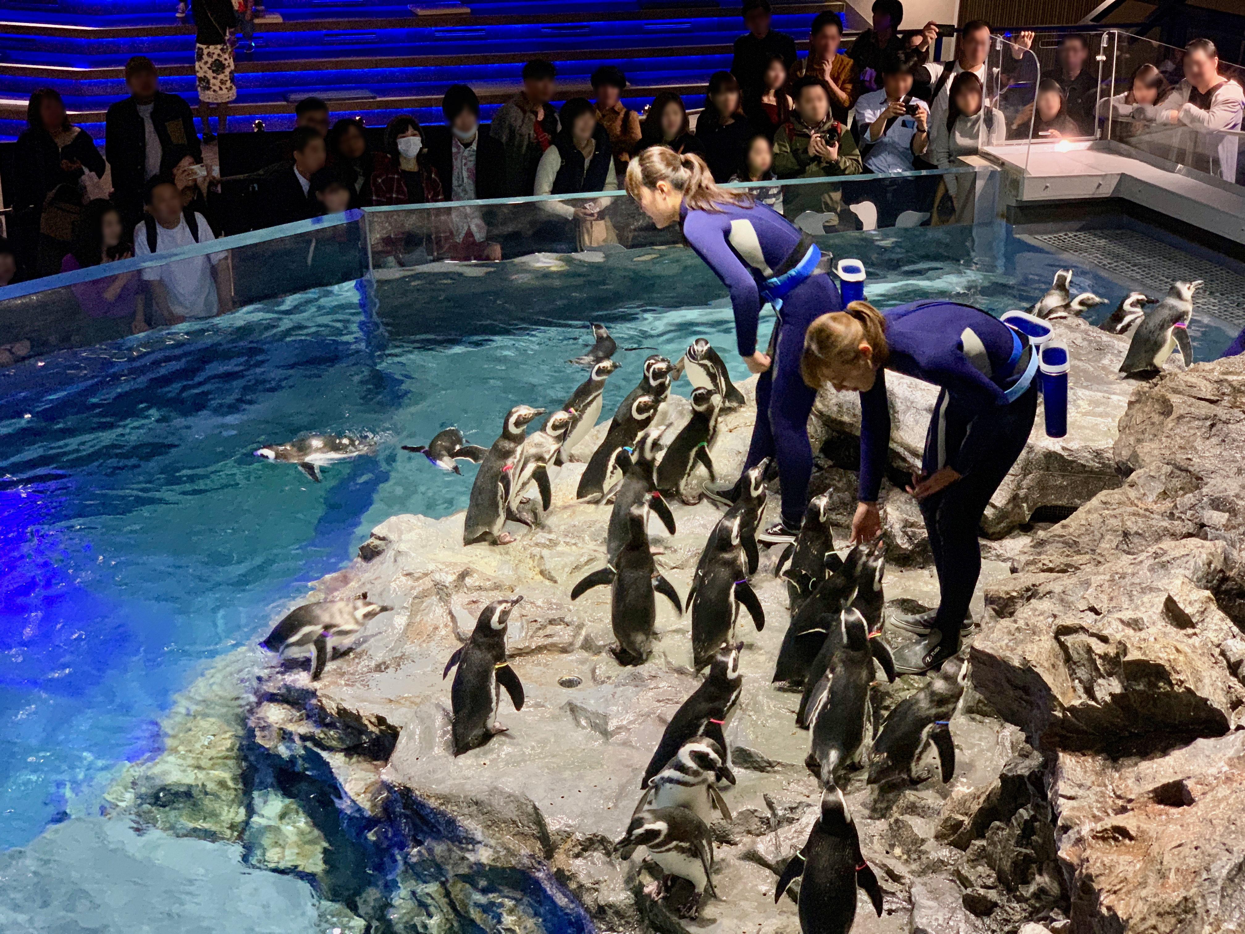 ペンギンにエサをやるスタッフ