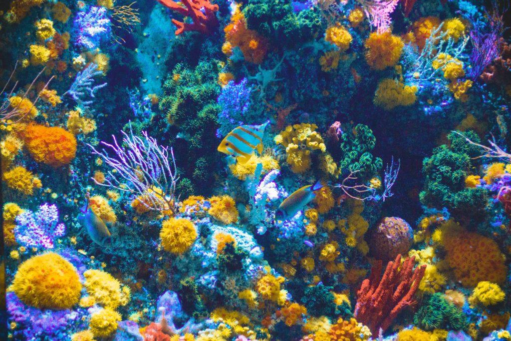 色とりどりのサンゴと熱帯魚