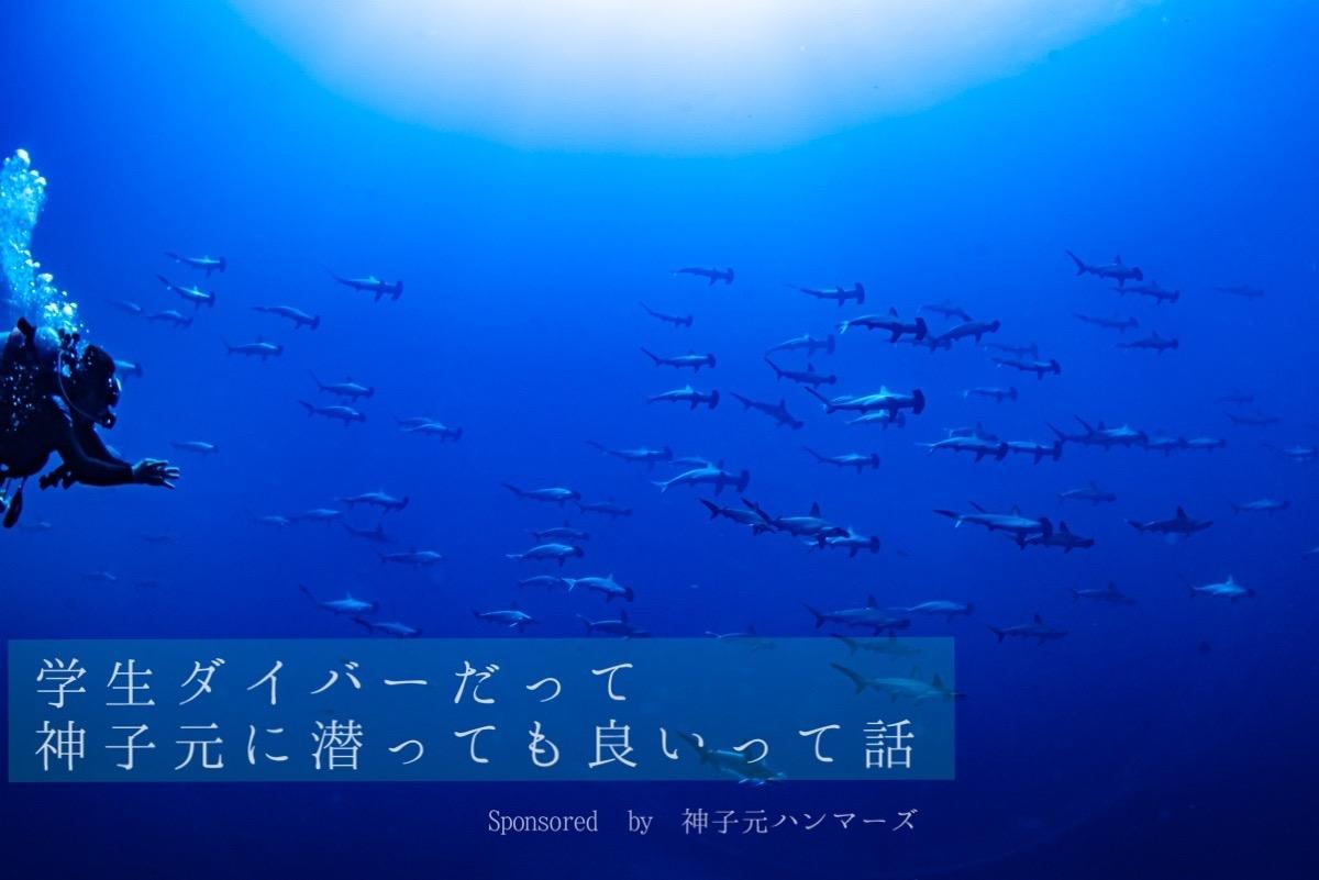 【開催レポート】学生限定・神子元チャーター企画第2弾!動画付き!