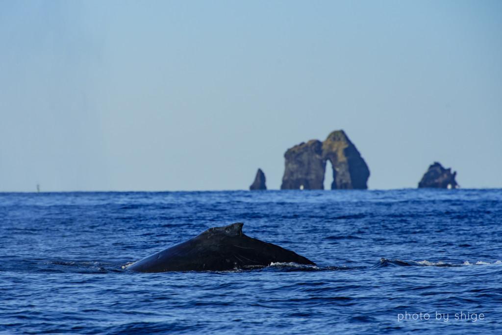 母島のシンボル四本岩とザトウクジラ