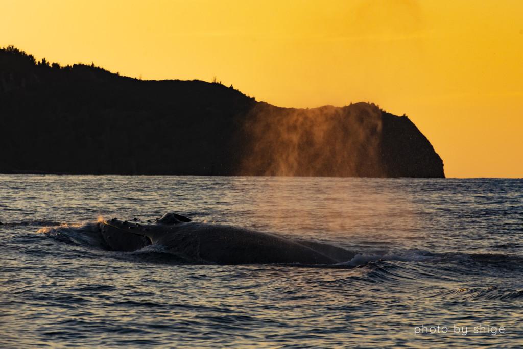 夕日にクジラのブローが照らされる