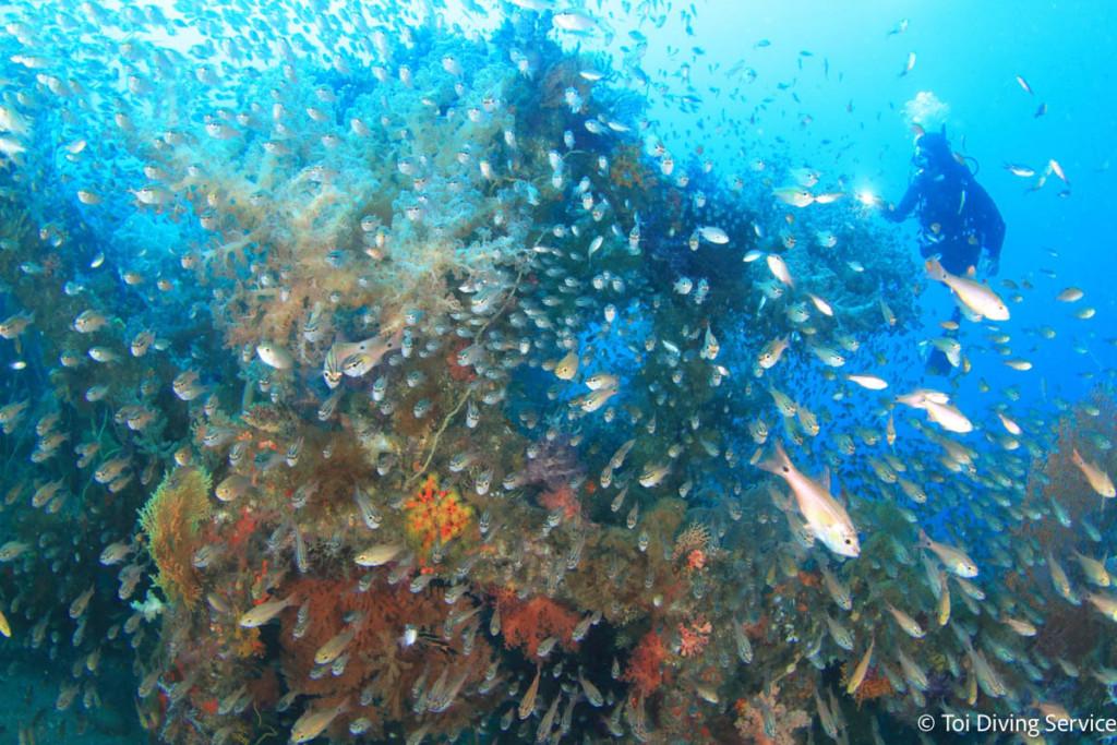 ダイビングスポット・土肥のネンブツダイの群れ