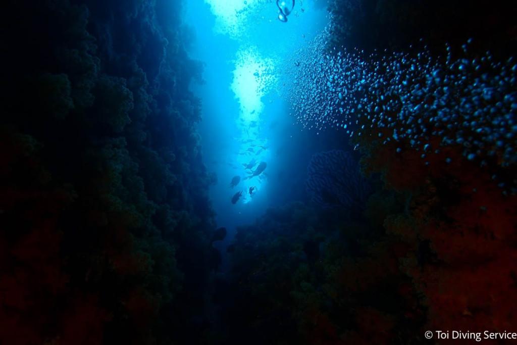 ダイビングスポット・土肥のサク根