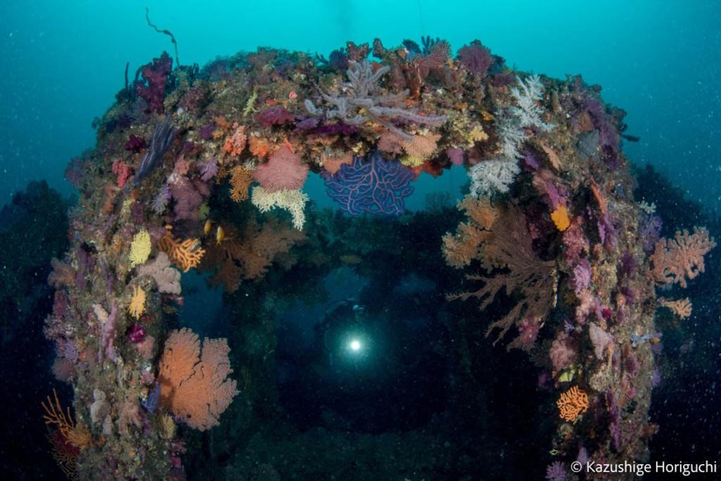 漁礁に生えるソフトコーラルが凄い