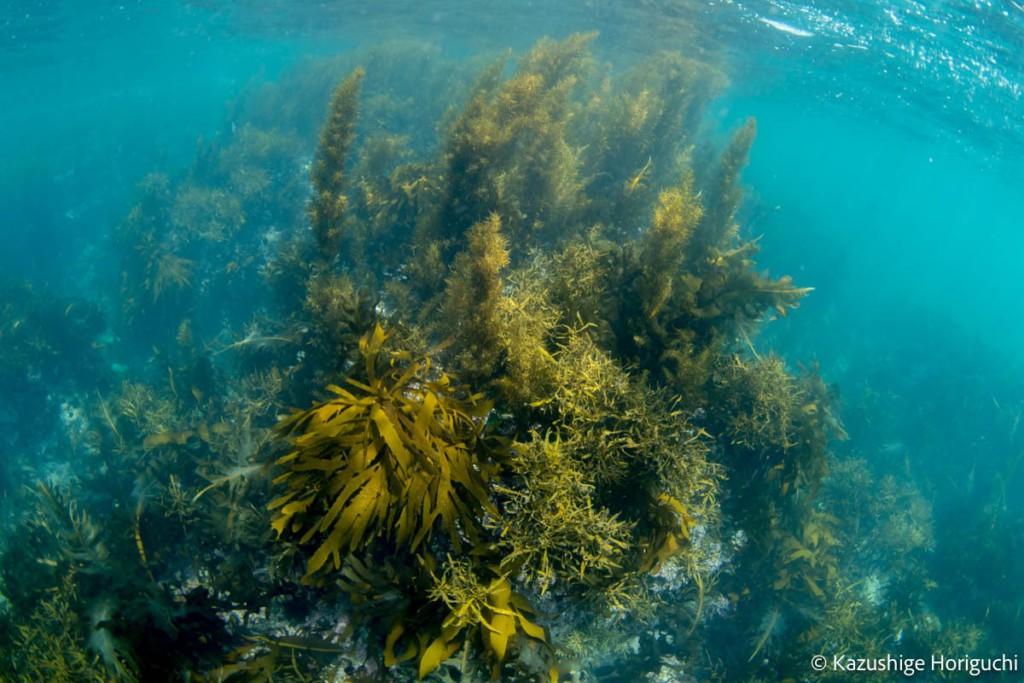 生い茂る海藻