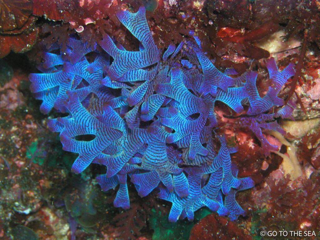 伊豆海洋公園の海藻