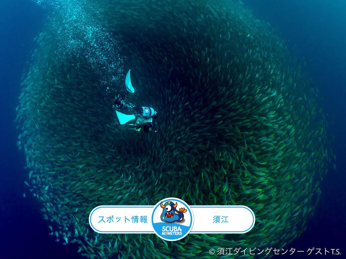 須江のダイビングスポット情報